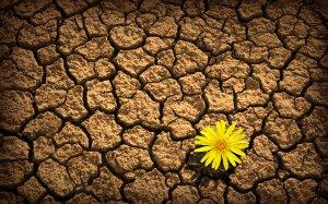 Yellow-flower-on-dry-soil-wallpaper_5567