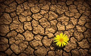 Yellow-flower-on-dry-soil-wallpaper_5567